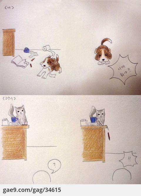 개와 고양이의 차이