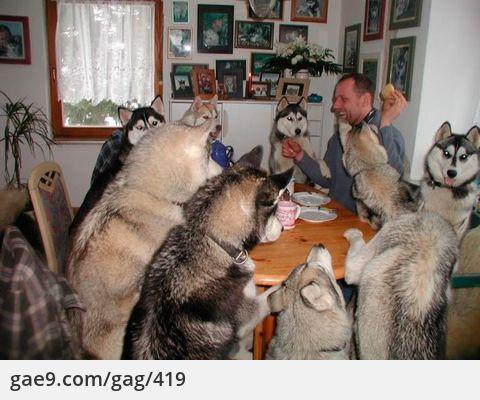 허스키 파티