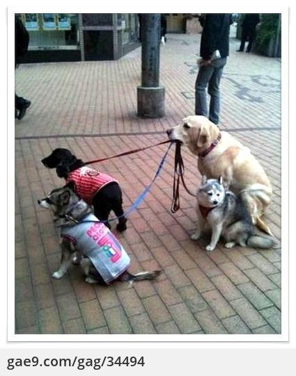 밥값하는 강아지