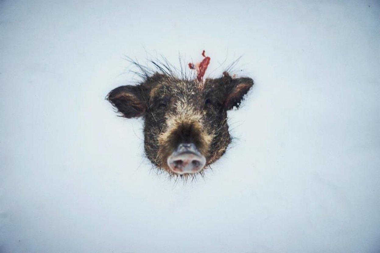 幡野広志写真展「いただきます、ごちそうさま。」