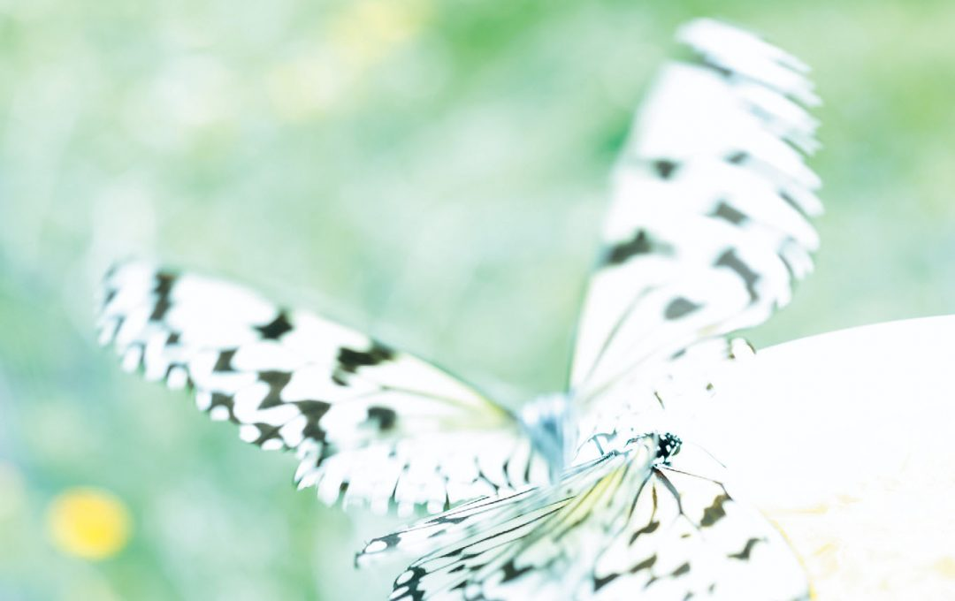 非現実的な雰囲気を演出する「蝶」写真。あえてピントを外す工夫も必要