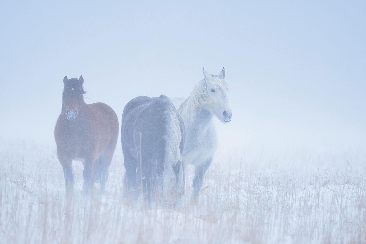 岡田敦写真展「Yururi Island ユルリ島の野生馬」