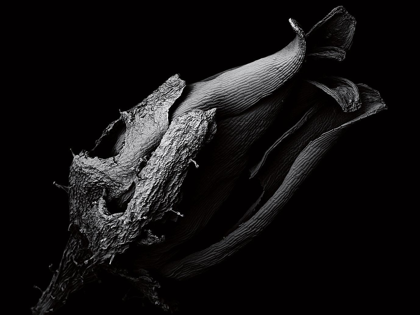 Tomoya Matsuura写真展「life beside you」