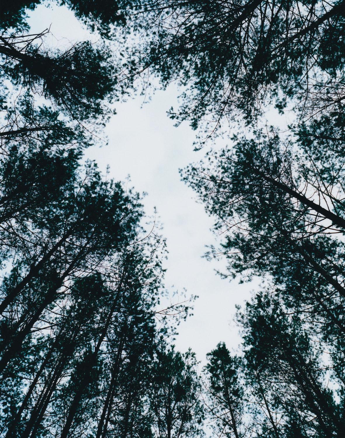 津田直写真展「エリナスの森」