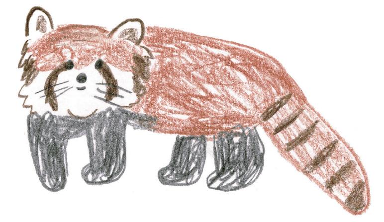 レッサーパンダを描いてみよう!