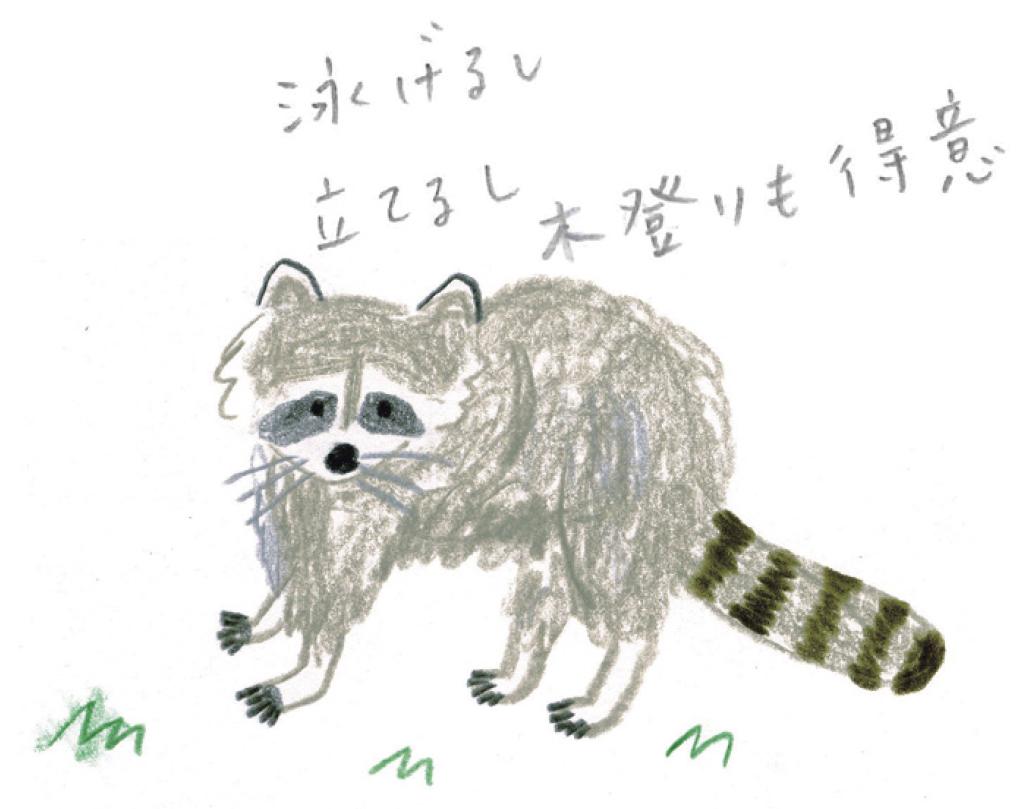ミヤタチカ-アライグマ04