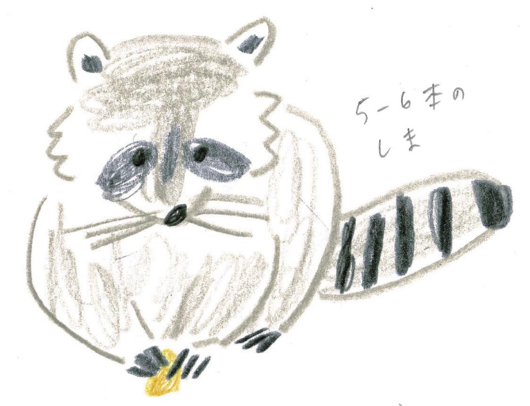ミヤタチカ-アライグマ02