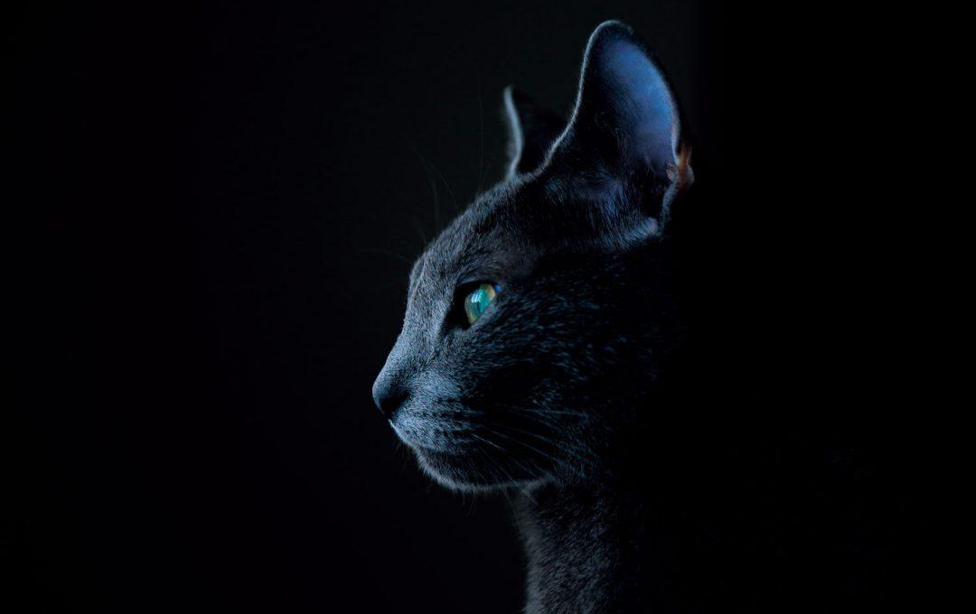 """""""ふと遠くを見つめた猫の横顔""""を撮るレシピ"""