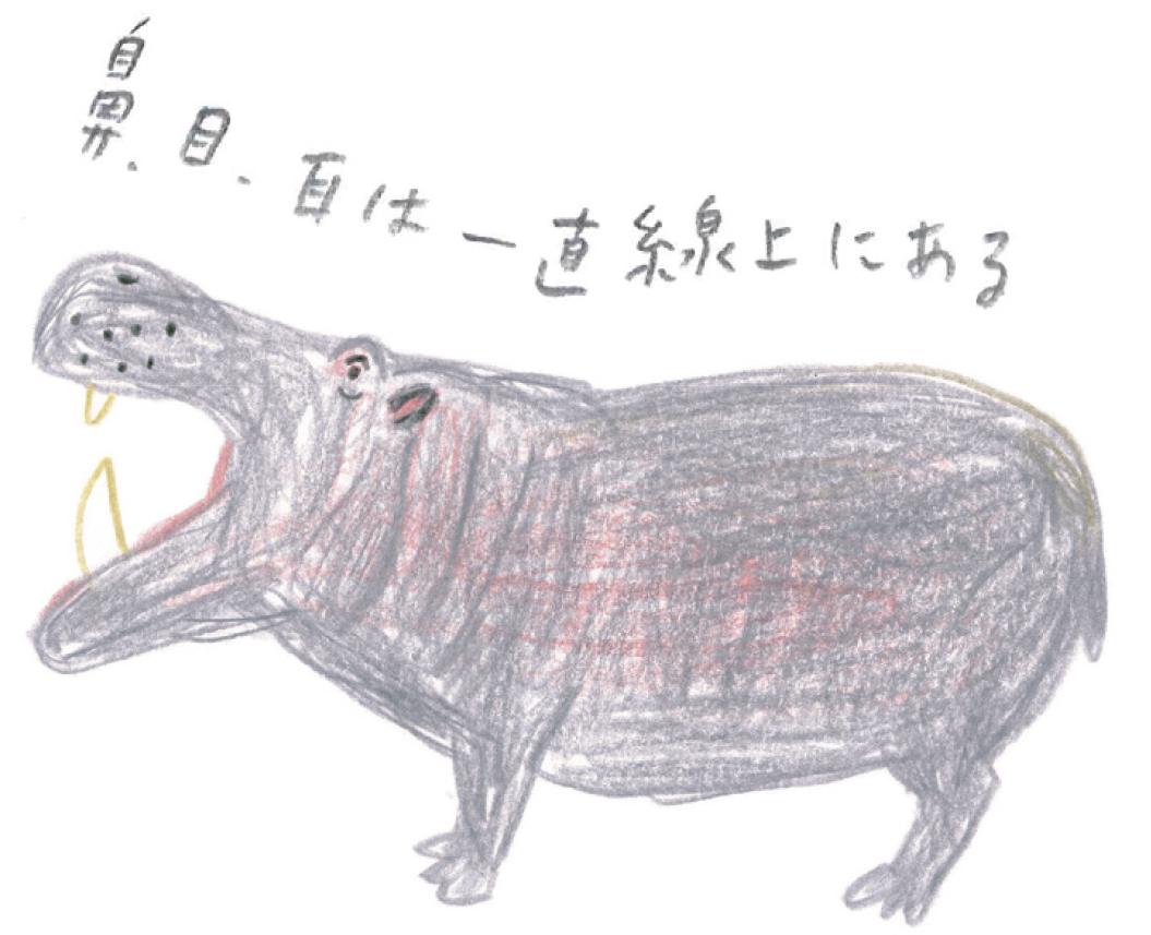 ミヤタチカのお絵描き動物園-第8回カバ02
