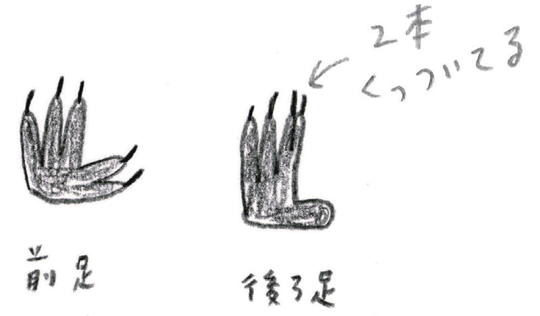 ミヤタチカ-11-コアラ-05
