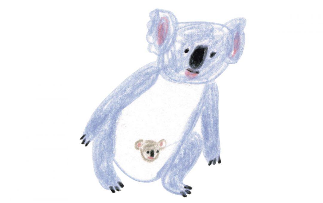 ユーカリの森の人気者、コアラを描いてみよう!