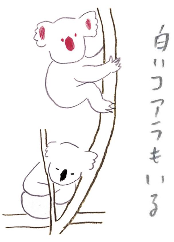 ミヤタチカ-11-コアラ-06