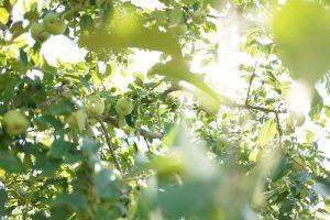 長野県 飯綱町、りんごの町で古民家に泊まって写真教室