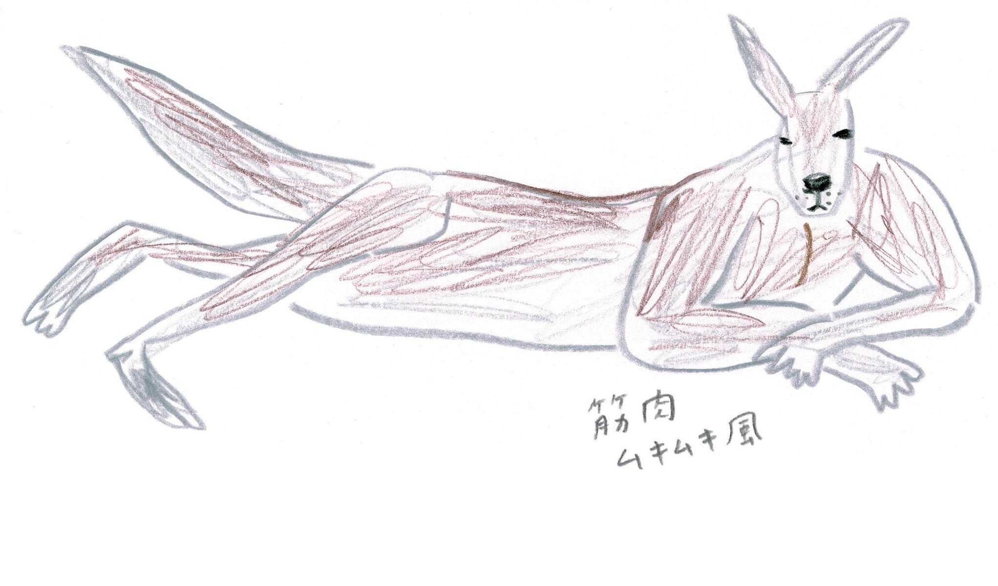 ミヤタチカ-カンガルー-02