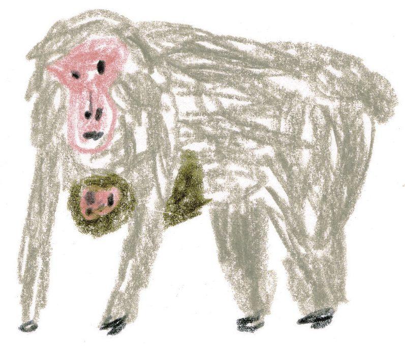 イラストレーター・ミヤタチカさんによる動物園スケッチ 愛嬌たっぷりのニホンザルを描いてみよう!