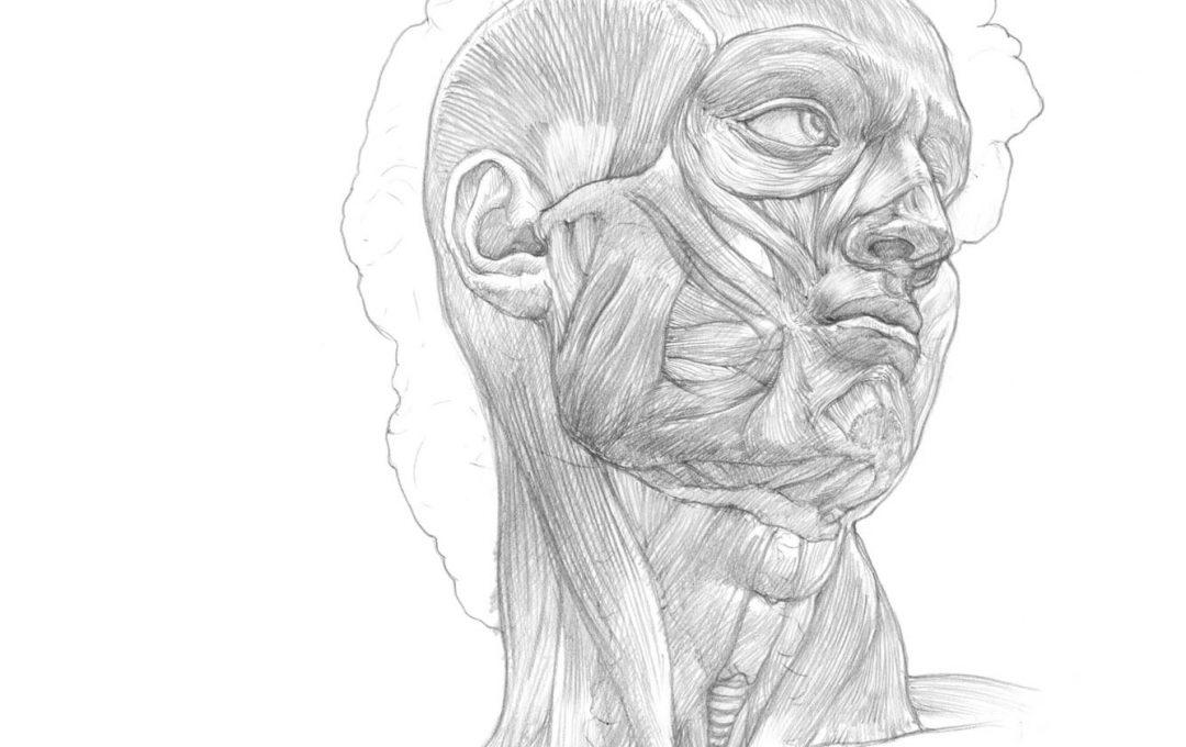 美術解剖学でデッサン力がアップする「ダヴィデ像の美術解剖図」