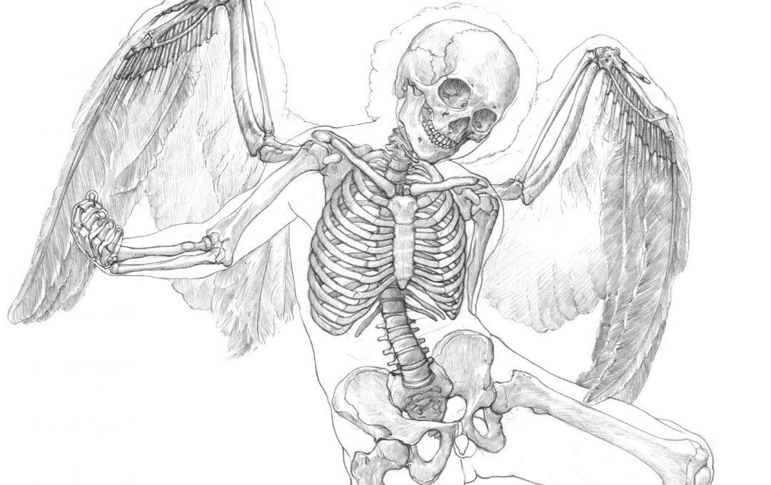 人体に翼を生やすことは可能か?キューピッドを美術解剖図で考察する