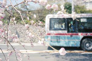 「SG on the ROAD 湘南モノレール沿線スナップ撮影講座 vol.3 ~湘南モノレール沿線「桜」を撮る」参加者募集中
