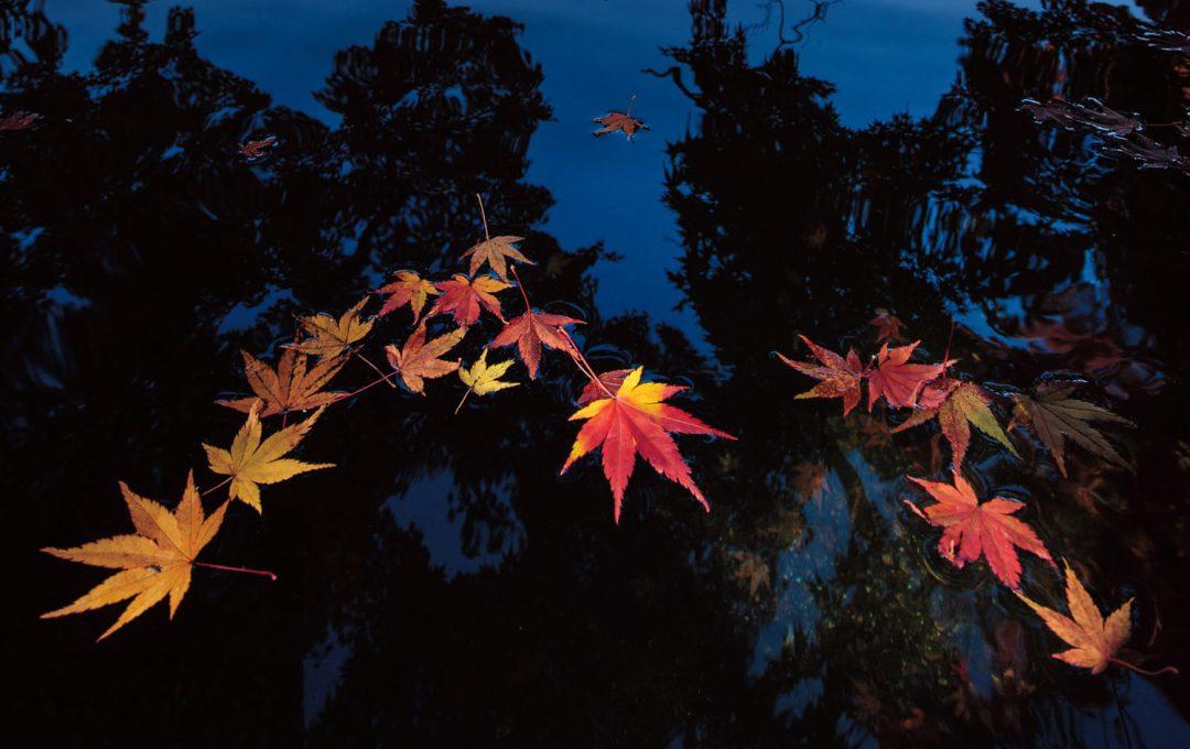 RAW現像テクニック 暗い水面の落葉と対岸の盛秋を同じ明るさで対比させる「明暗差」の処理法