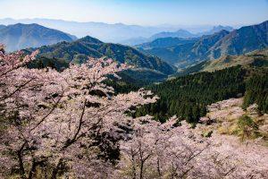 青空と桜の「清々しさ」を表現する透明感の出し方