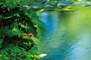 【RAW現像・上級編】渓流に映える「緑映」を表現するコツは「明るさ」と「コントラスト」