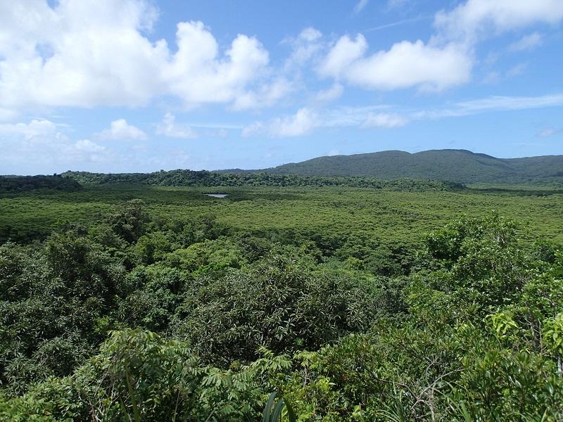 西表島のマングローブ林。