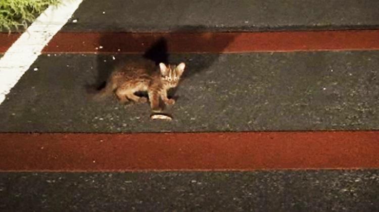路上に出てきたヤマネコの子ネコ。事故にあう前に森へ追い返す。