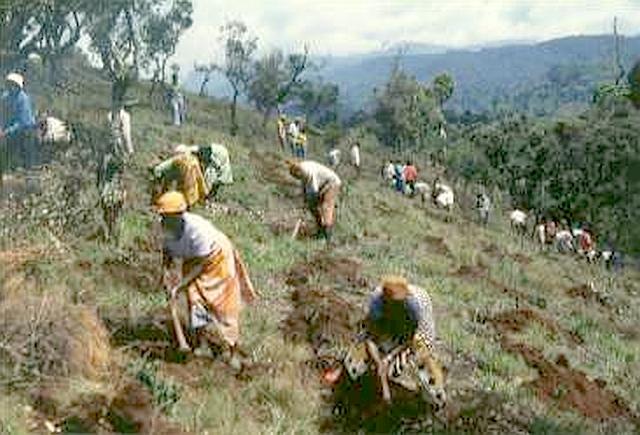 キリマンジャロ山の裸地化した里山の尾根で植林に取り組む村人たち(1994年)。ここかつての政府の森林プランテーション跡地。再植林されることなく放棄された。