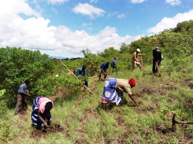 ンガンジョーニ村での村人たちによる植林の様子