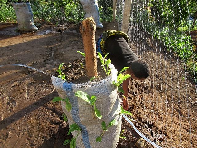 たくさの野菜を収穫できますように!