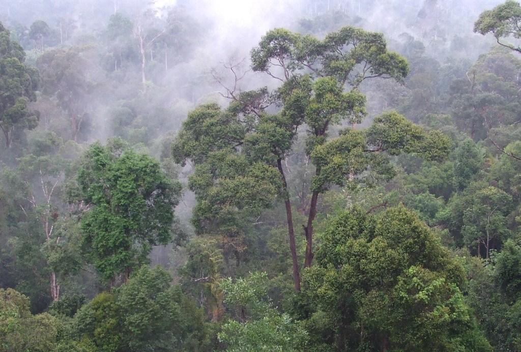 豊かな生態系を育むインドネシアの熱帯雨林