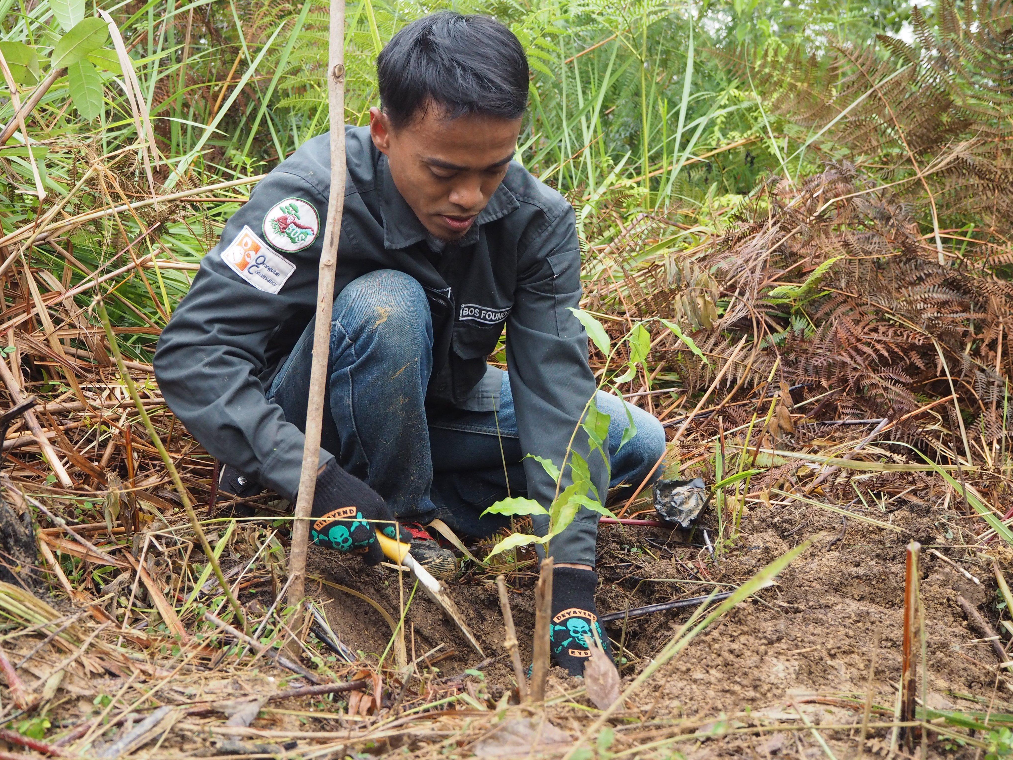 現地スタッフによる植林