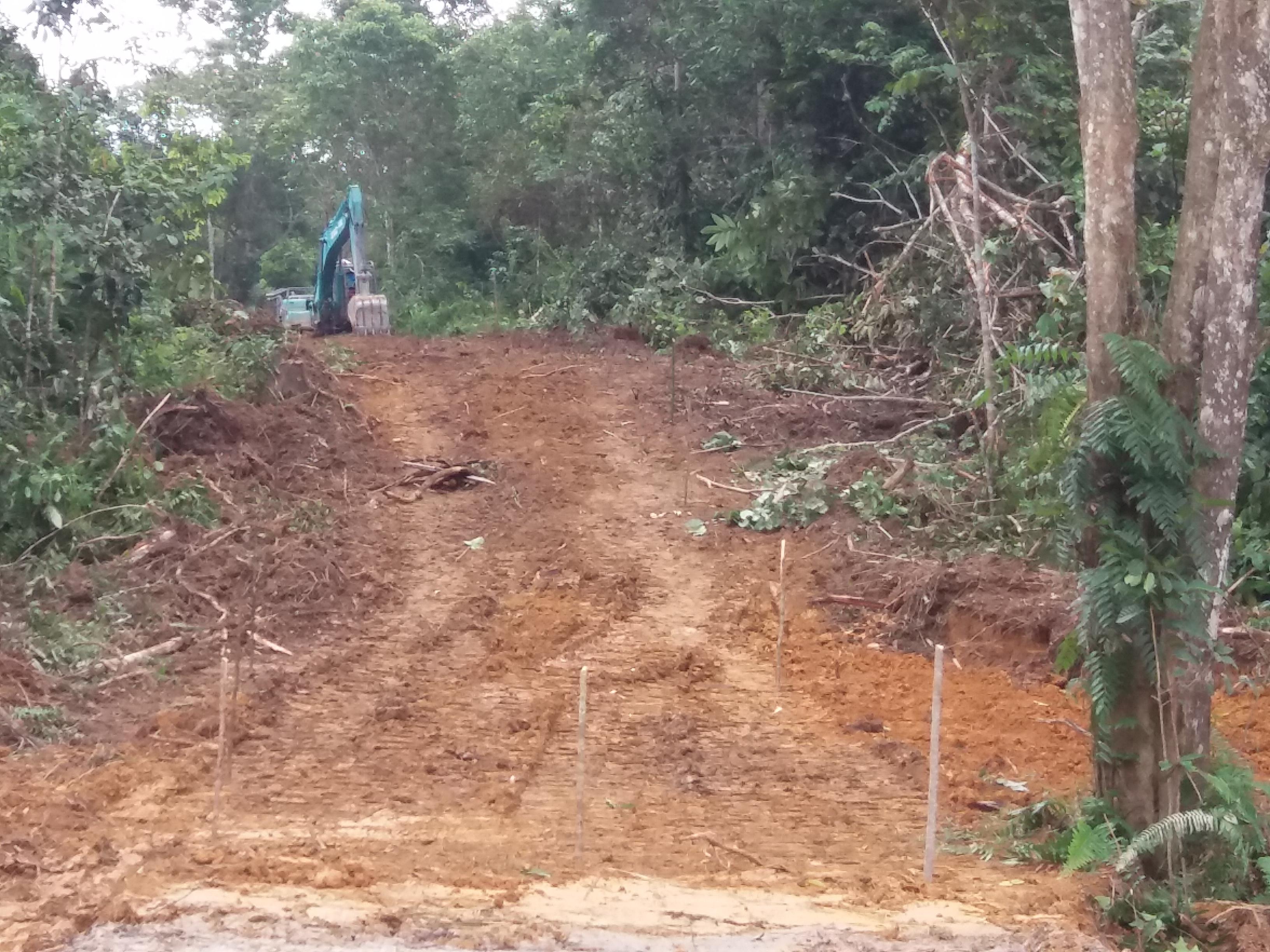 森林火災の延焼を防ぐために草木を帯状に伐採した防火帯
