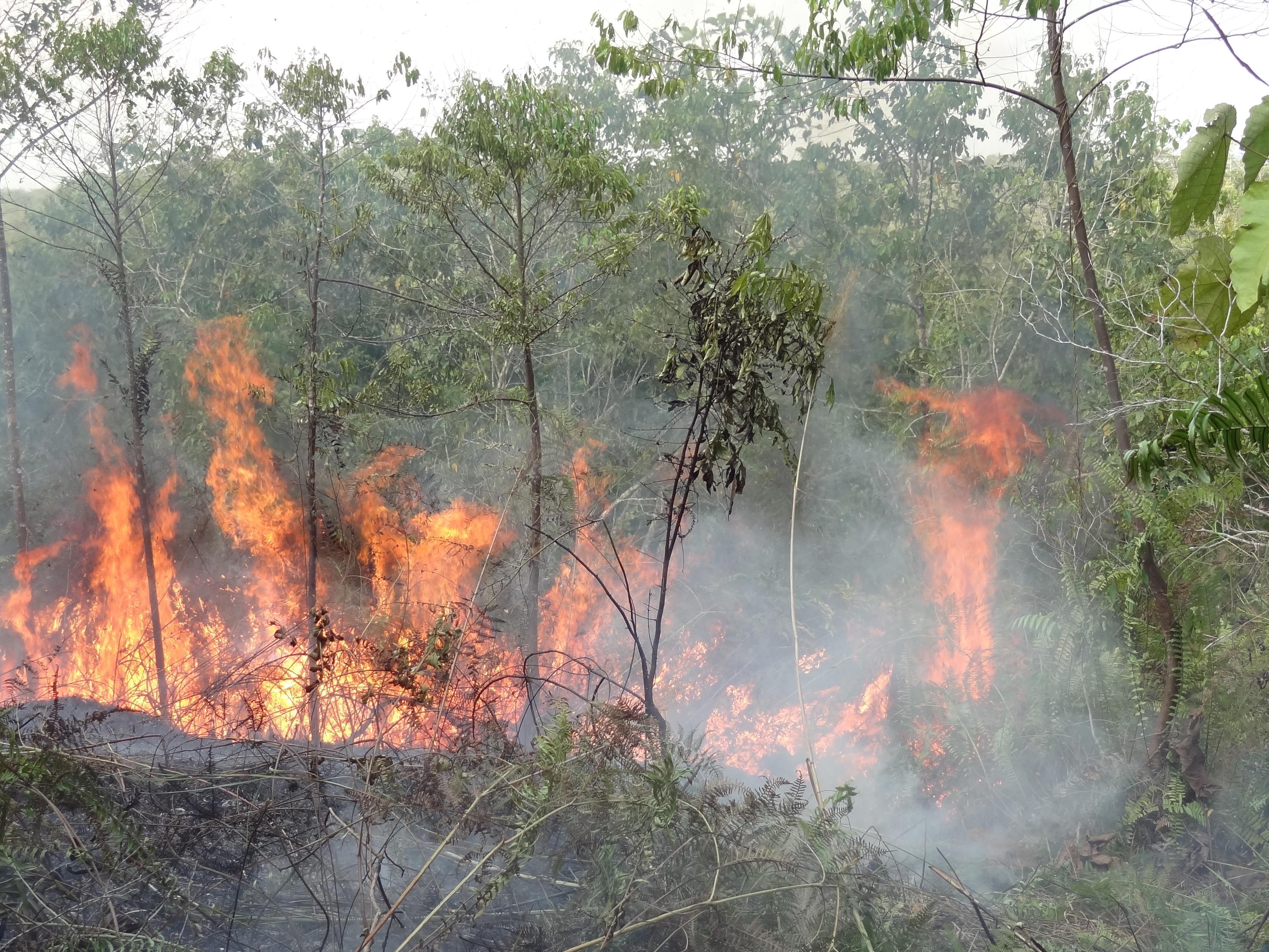 2015年にオランウータンのリハビリ施設を襲った森林火災