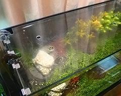 O.K様 水槽の天板ガラス①