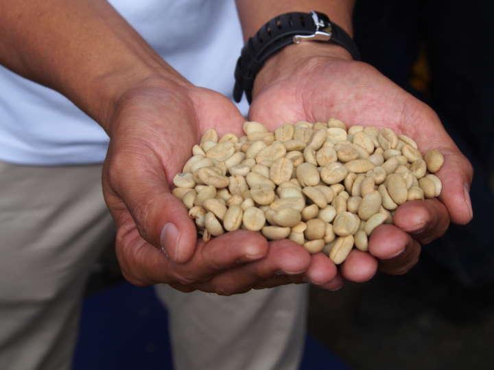 買い取るコーヒー豆は、脱肉・水洗い・乾燥までを終えた「パーチメント」の状態