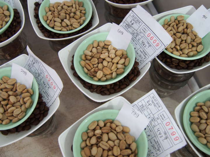 大きさや生産者ごとに、カップテスト用に用意されたコーヒー豆