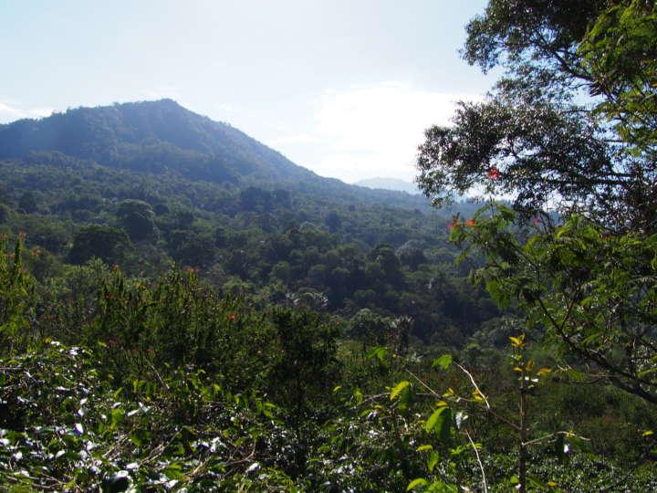 パダマラン農場からの眺め。標高900〜1250mの高地ゆえの昼夜の寒暖差、弱酸性の土壌、適度な降雨量などコーヒーづくりの理想的な条件を満たしている