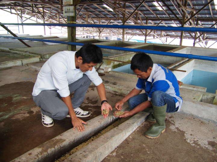 湧き水で洗浄している豆をチェックする吉原さん