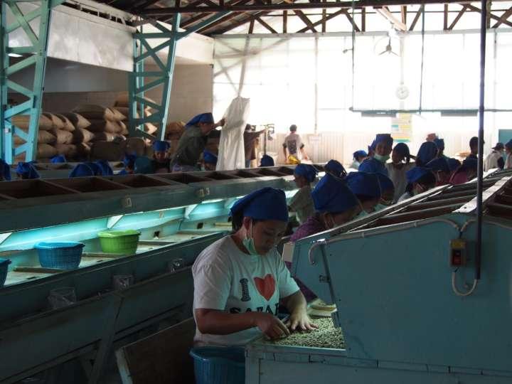 手作業による豆の選別は地元の若い女性たちが行っている