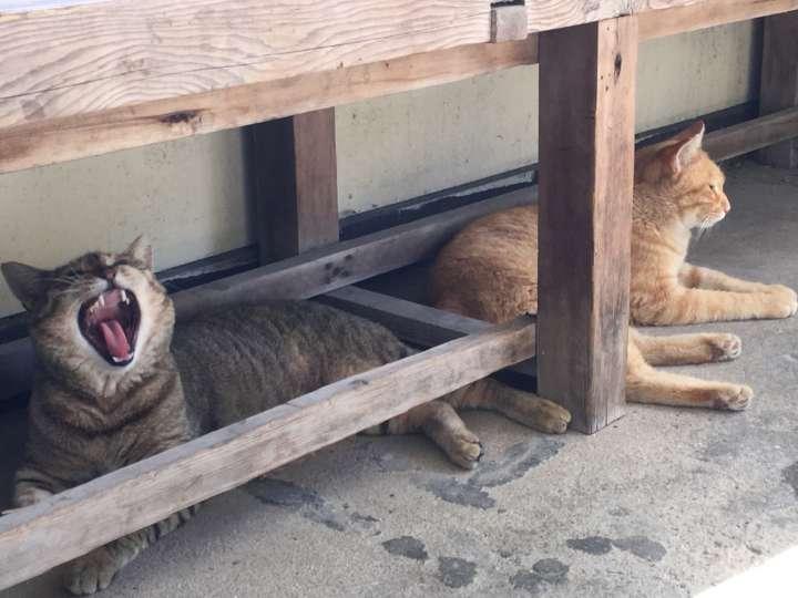 待合所で私が涼んでいると、3匹のネコが同じように涼みにやってきました