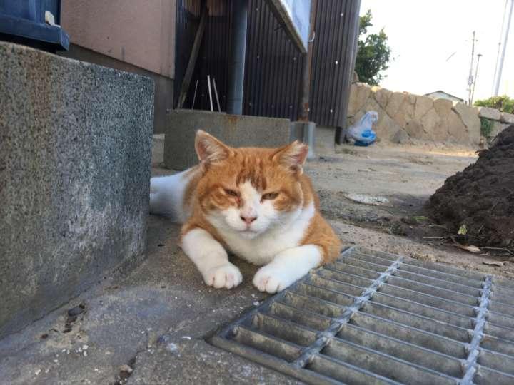 「なんや、そろそろ帰るんか?」と関西弁を話しそうな福岡のネコ