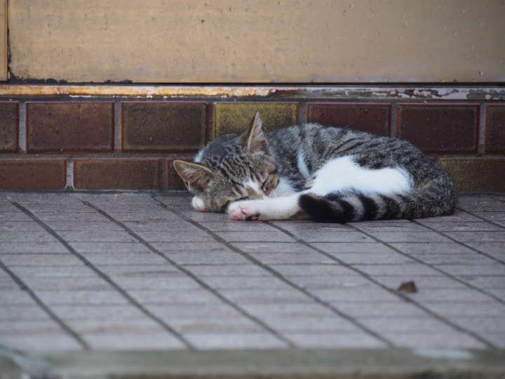 玄関で眠る子もいます