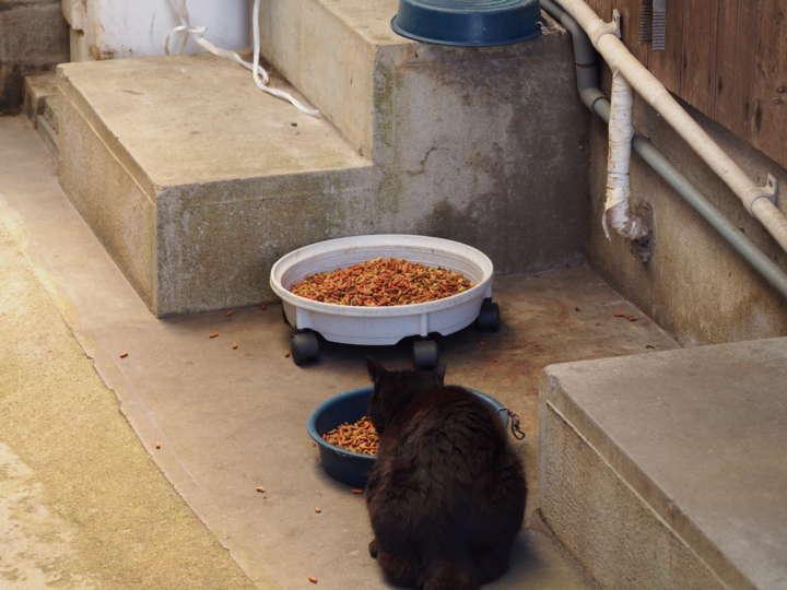 軒先に餌を置いている家がちらほら。島のネコたちはこの餌を食べているようです
