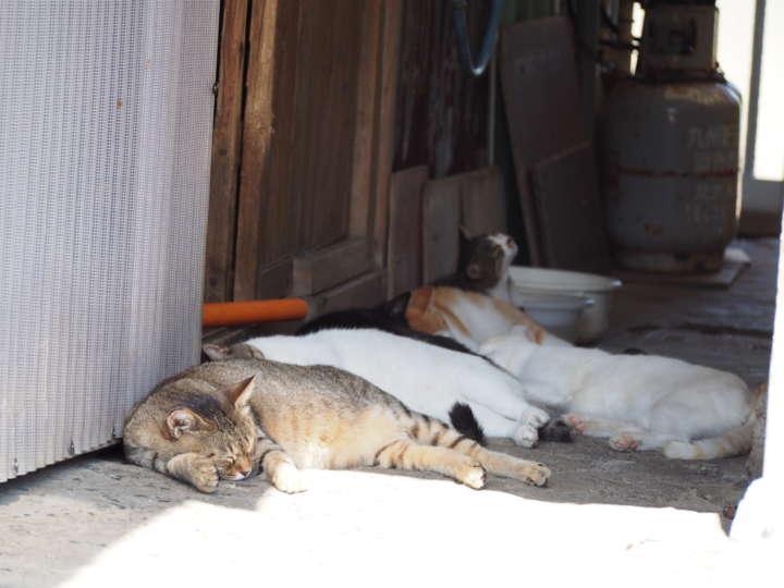 日陰に集まってみんなでお昼寝しています