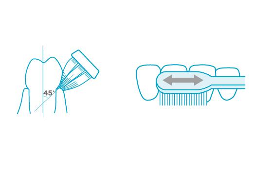 歯周ポケットの汚れまでかき出すパナソニックの最新ドルツで正しい口腔ケアを習慣化!   &GP