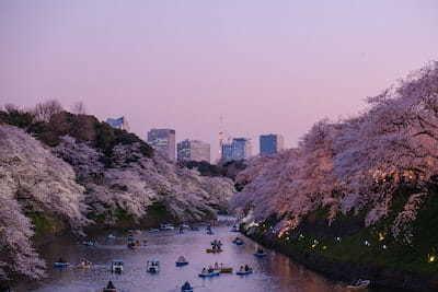 桜の見える景色