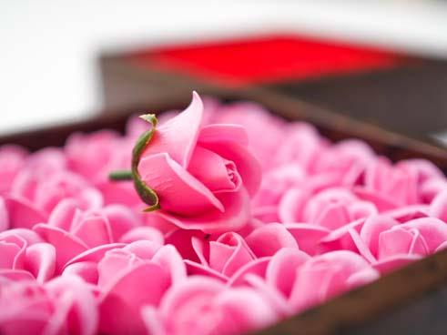 ミニローズフレグランスS[25輪入り] red,pink