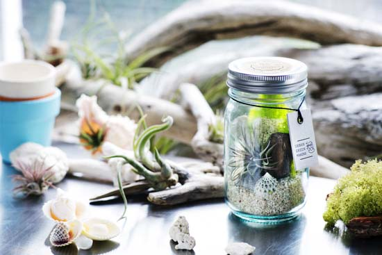 VANTAGE GLASS JAR TERRARIUM KIT03