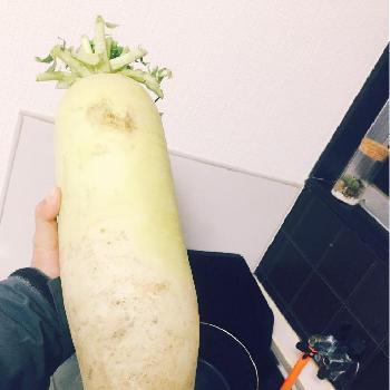 冬野菜の画像
